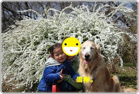 ブログFILE0427.CHK-s-20161231こぴ.jpg