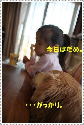 ブログIMG_0248-s-20170130こぴ.JPG