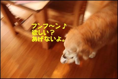 ブログIMG_0249-s-20170131こぴ.JPG