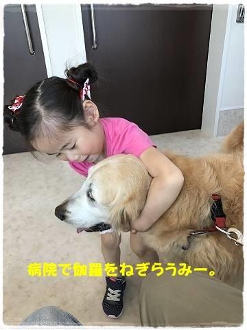 ブログIMG_0814-s-20170529こぴ.JPG