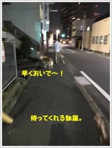ブログIMG_1001-s-20170629こぴ.JPG