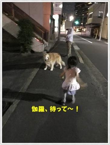 ブログIMG_1002-s-20170629こぴ.JPG