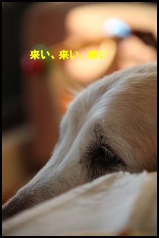 ブログIMG_1094-s-20170228こぴ.JPG