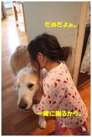 ブログIMG_1533-s-20170330こぴ.JPG