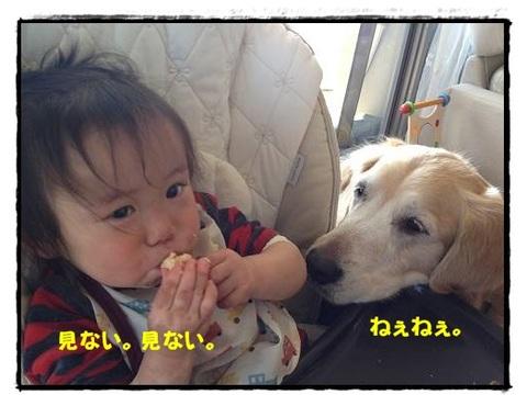 ブログIMG_1769-s-20170630こぴ.JPG