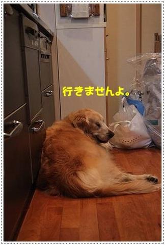 ブログIMG_3614-s-20170629こぴ.JPG