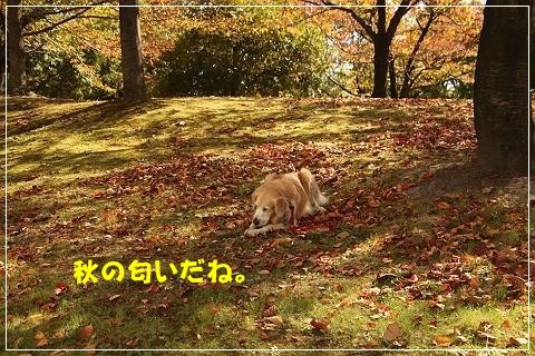 ブログIMG_5625-s-20151029こぴ.JPG