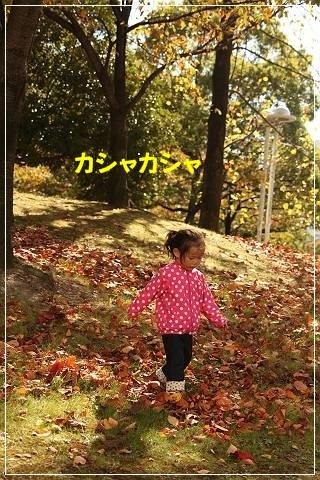 ブログIMG_5652-s-20151029こぴ.JPG