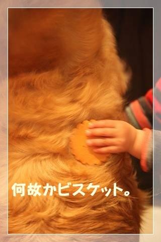 ブログIMG_5826-s-20140302こぴ.JPG