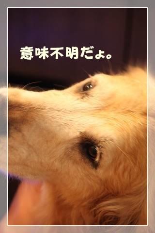 ブログIMG_5828-s-20140302こぴ.JPG