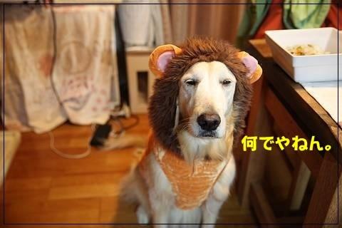 ブログIMG_6056-s-20151109こぴ.JPG