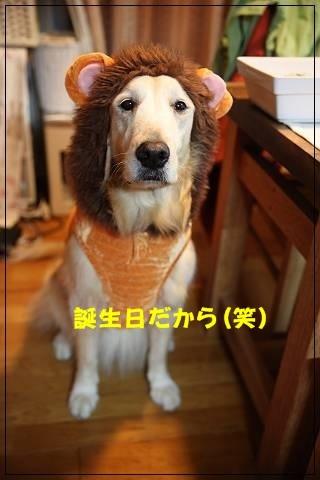 ブログIMG_6058-s-20151109こぴ.JPG