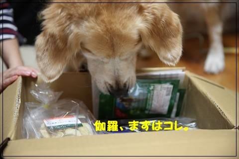 ブログIMG_6117-s-20151109こぴ.JPG
