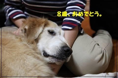 ブログIMG_6176-s-20151109こぴ.JPG