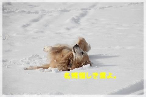 ブログIMG_7636-s-20160117こぴ.JPG