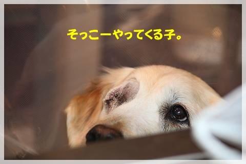 ブログIMG_9367-s-20161230こぴ.JPG