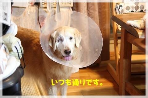 ブログIMG_9379-s-20161230こぴ.JPG