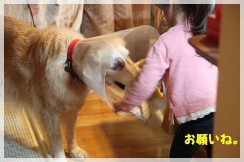 ブログIMG_9380-s-20161230こぴ.JPG