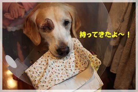 ブログIMG_9381-s-20161230こぴ.JPG