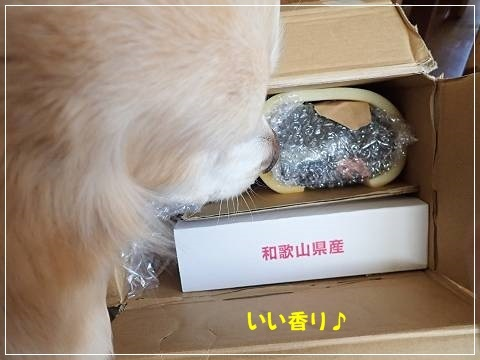 ブログP2120031-s-20180225こぴ.JPG