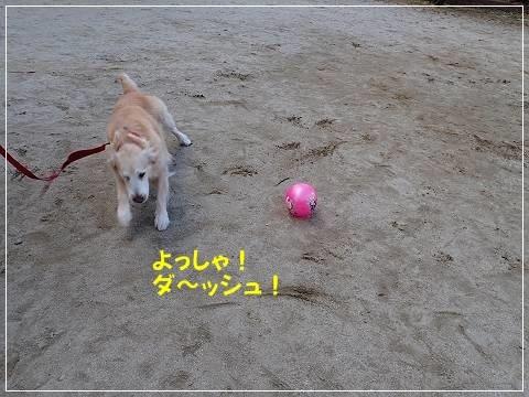 ブログP2170064-s-20180227こぴ.JPG