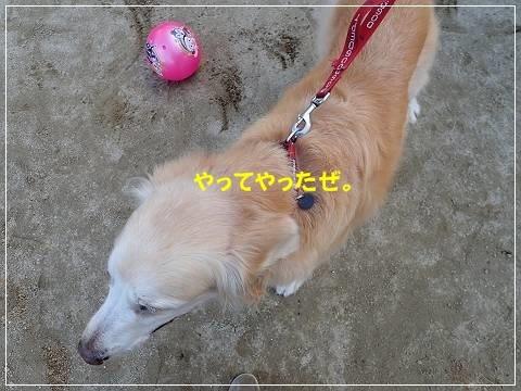 ブログP2170066-s-20180227こぴ.JPG