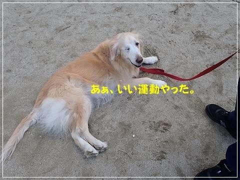 ブログP2170072-s-20180227こぴ.JPG