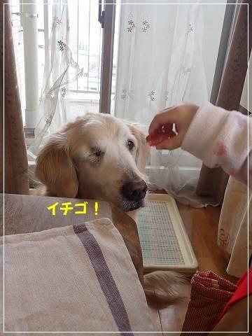 ブログP2250025-s-20180225こぴ.JPG