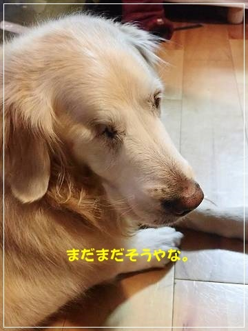 ブログP2250042-s-20180226こぴ.JPG