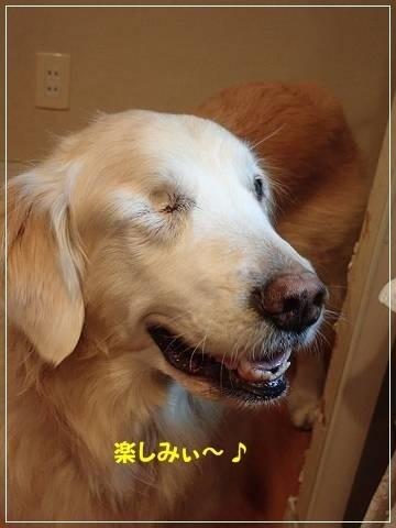 ブログP3030049-s-20180304こぴ.JPG