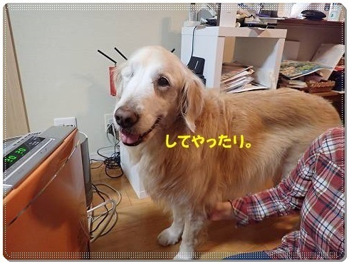 ブログP3030168-s-20180309こぴ.JPG