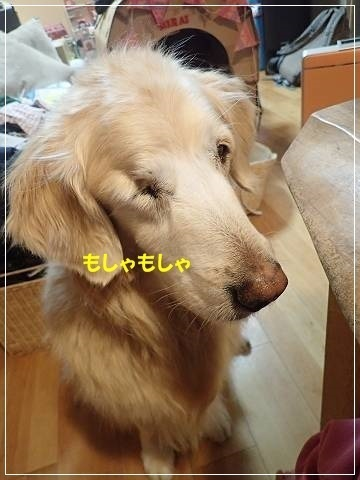 ブログP3060013-s-20180307こぴ.JPG