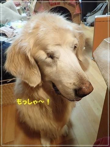 ブログP3060015-s-20180307こぴ.JPG
