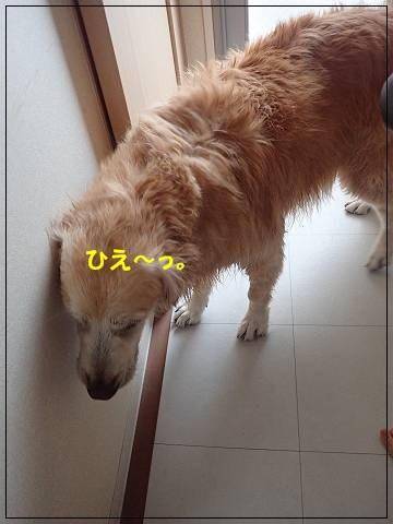 ブログP9240059-s-20170929こぴ.JPG