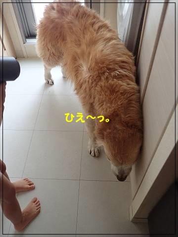 ブログP9240063-s-20170929こぴ.JPG