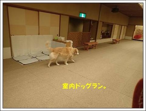 ブログPB040057-s-20171122こぴ.JPG