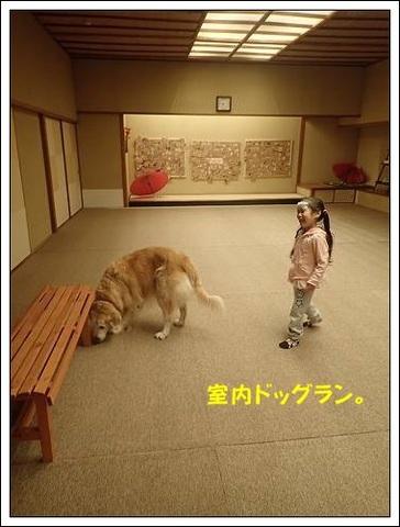ブログPB040060-s-20171122こぴ.JPG