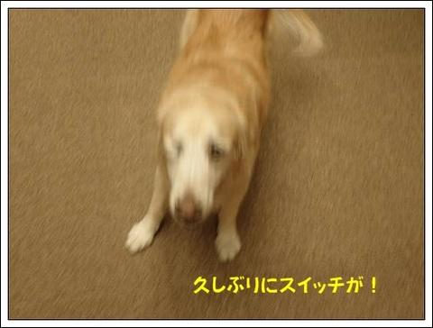 ブログPB040064-s-20171122こぴ.JPG