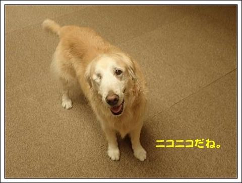 ブログPB040067-s-20171122こぴ.JPG