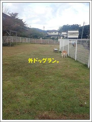 ブログPB050075-s-20171123こぴ.JPG
