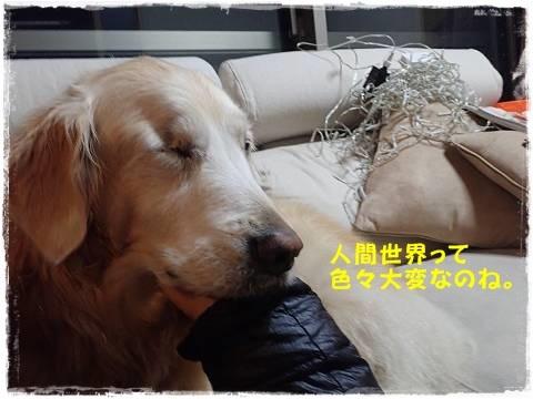 ブログPC120066-s-20171213こぴ.JPG