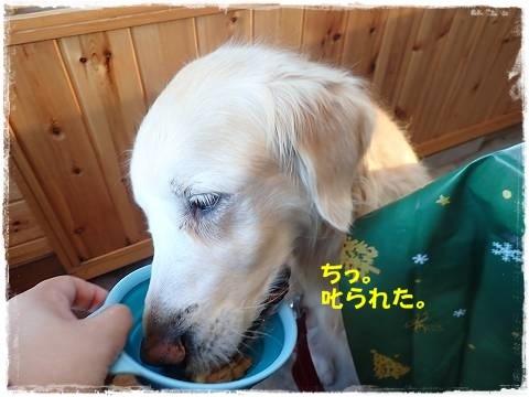 ブログPC170136-s-20171221こぴ.JPG